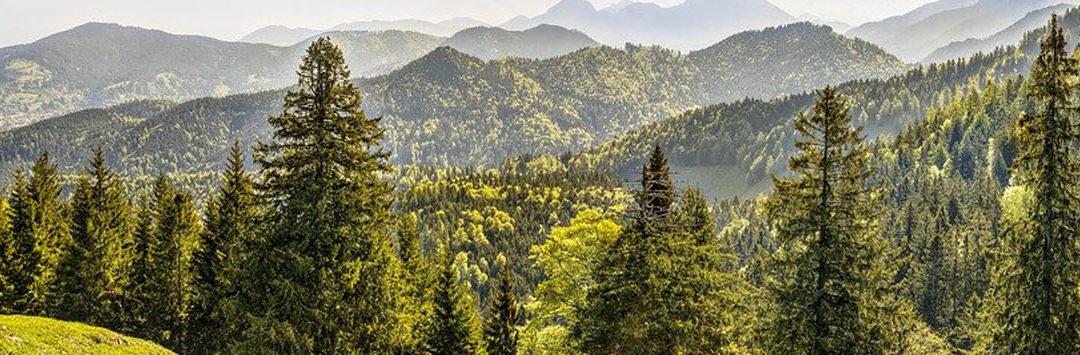 """Konkurs """"Zbieramy – oszczędzamy lasy"""""""